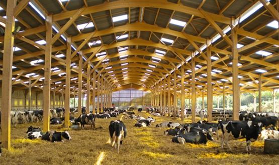 hangar agricole en bois et constructions industrielles bois. Black Bedroom Furniture Sets. Home Design Ideas